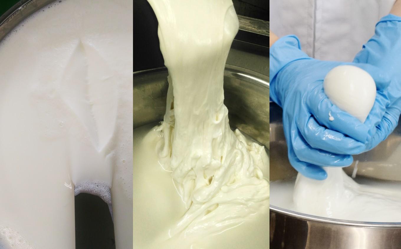 良質なミルクがおいしいチーズを生み出します。