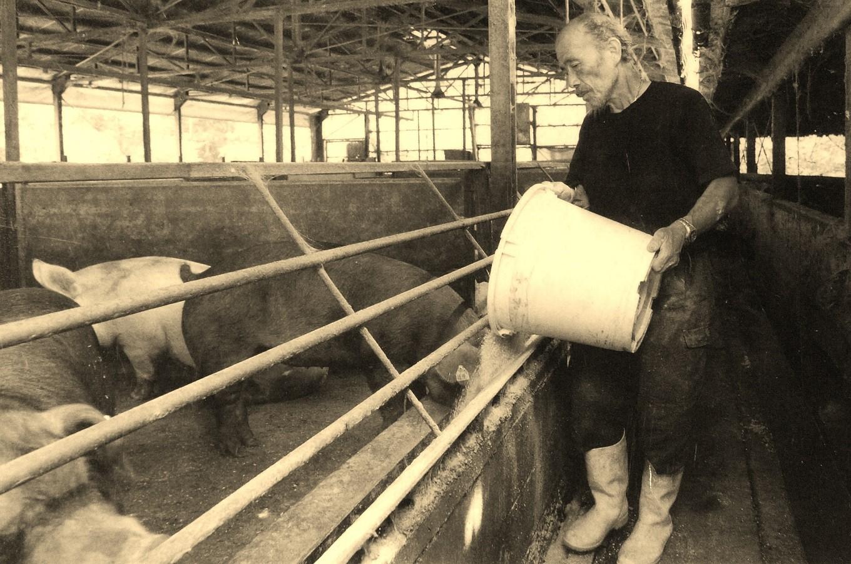 先代から引き継がれた高い技術とこだわりが高品質の豚肉を育てます。