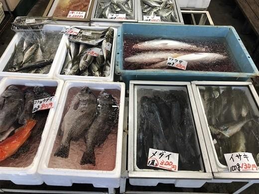 カネシチ水産の鮮魚売り場