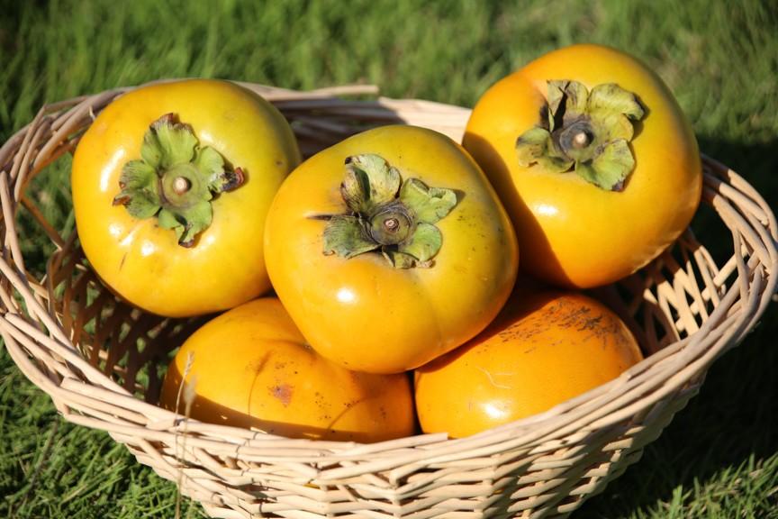 1つが300g~500g程ある大型の完全甘柿 それが太秋柿です