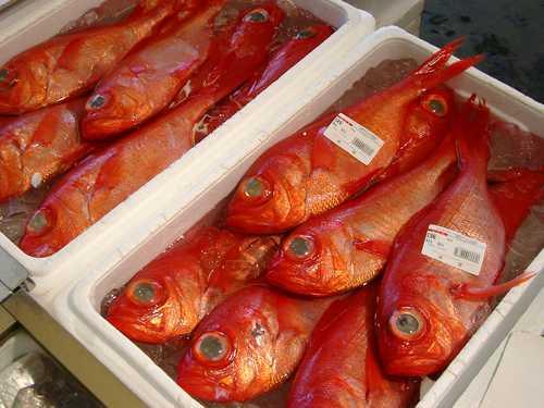 カネシチ水産の釣り金目鯛