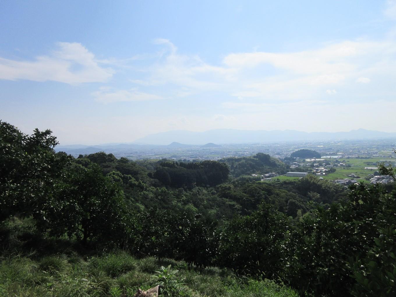 桜井市内を一望!たくさんの自然に囲まれて育った果物です。