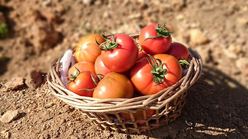 厳選したフルーツトマトを搾って作りました