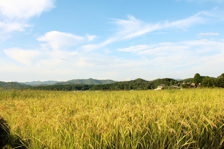 熟練の契約農家が育てたお米を厳選。