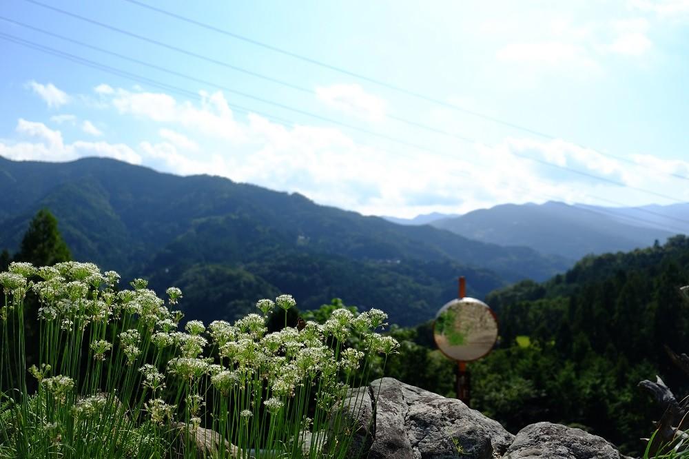 吉野川市の美郷。雄大な自然に囲まれた場所です。