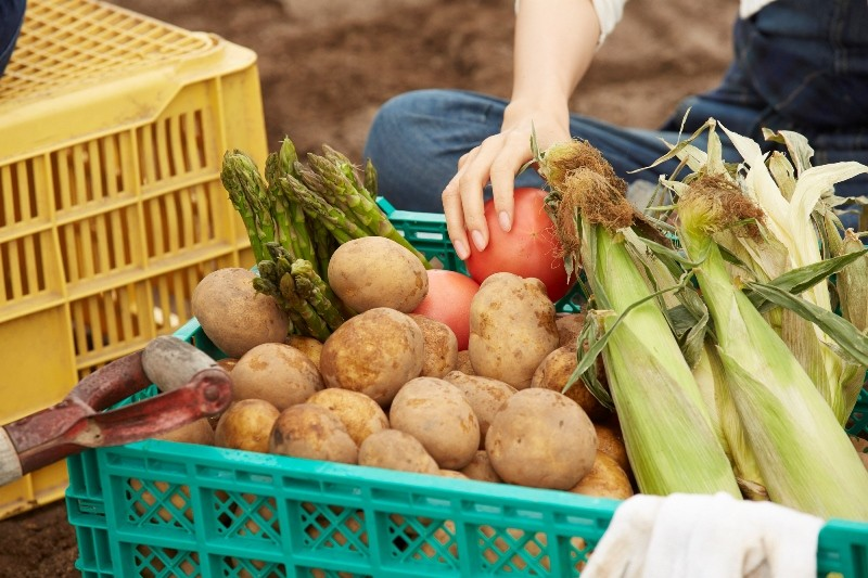 毎月、朝採れの新鮮野菜をお届けします!