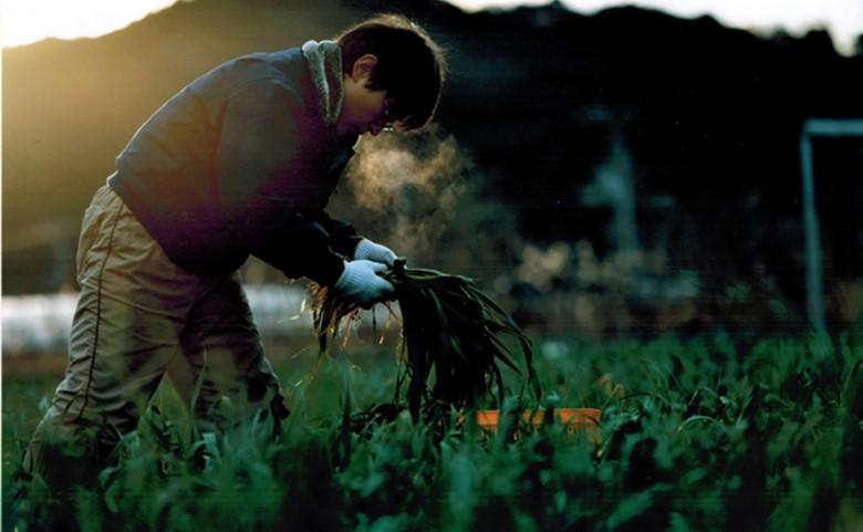 葉にんにくの収穫シーズン12月末~2月