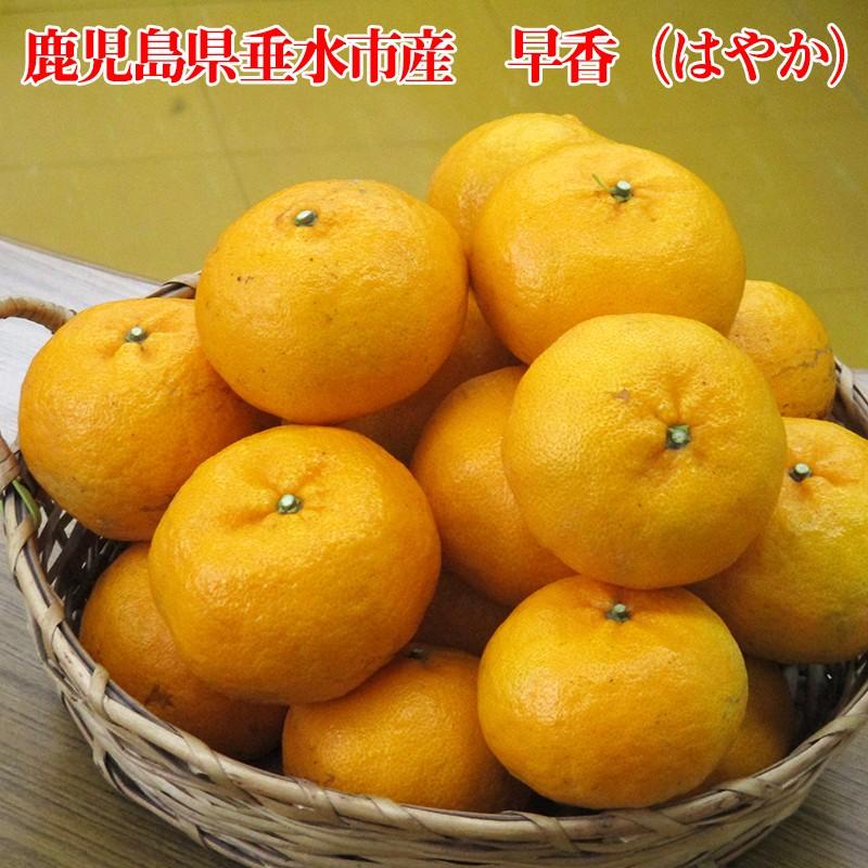 A1-1613/早香(はやか)5kg