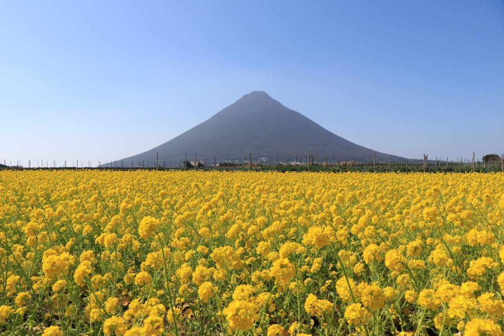 """別名""""薩摩富士""""と呼ばれる、指宿市のシンボル『開聞岳』"""