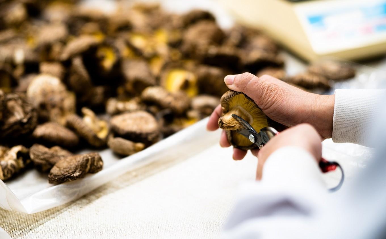 どんこ系と香信系の食べ比べ!原木乾しいたけ 袋詰め2種3袋セット