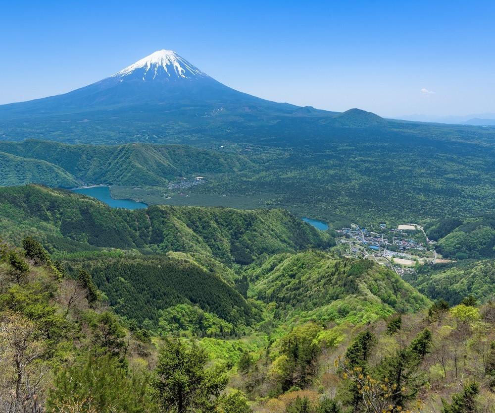 ニホンジカが生息する富士山麓の豊かな森