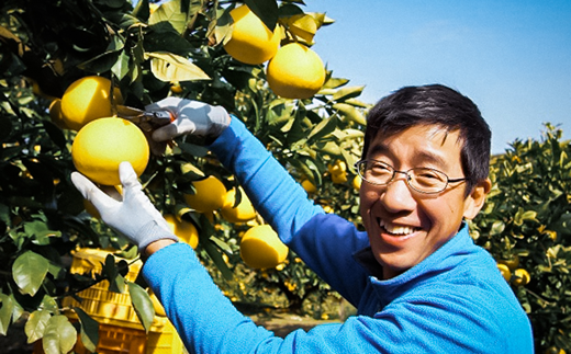熟した文旦を収穫する松岡さん