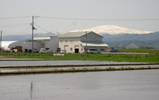 月山を望む天童市の西部で米づくり