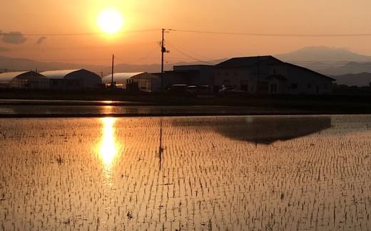夕日が輝く田んぼの水面