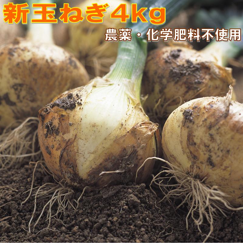 W-2223/甘~い新玉ねぎ4kg!農薬・化学肥料不使用
