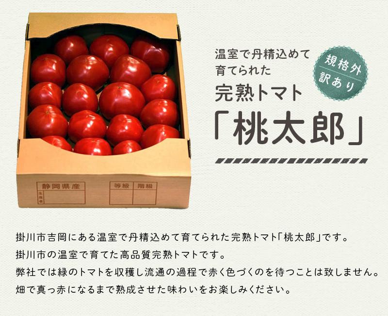 掛川市で育てた桃太郎トマトです!