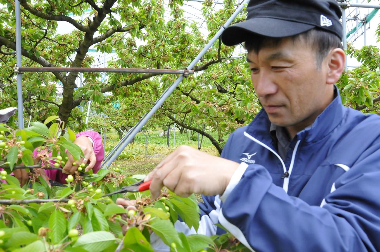 天童市内で観光果樹園を営む髙柳真一さん