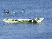 増毛のアワビ漁は10月~12月