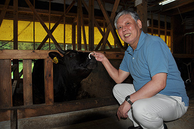 村上社長が丹精込めて育てている隠岐黒磯牛