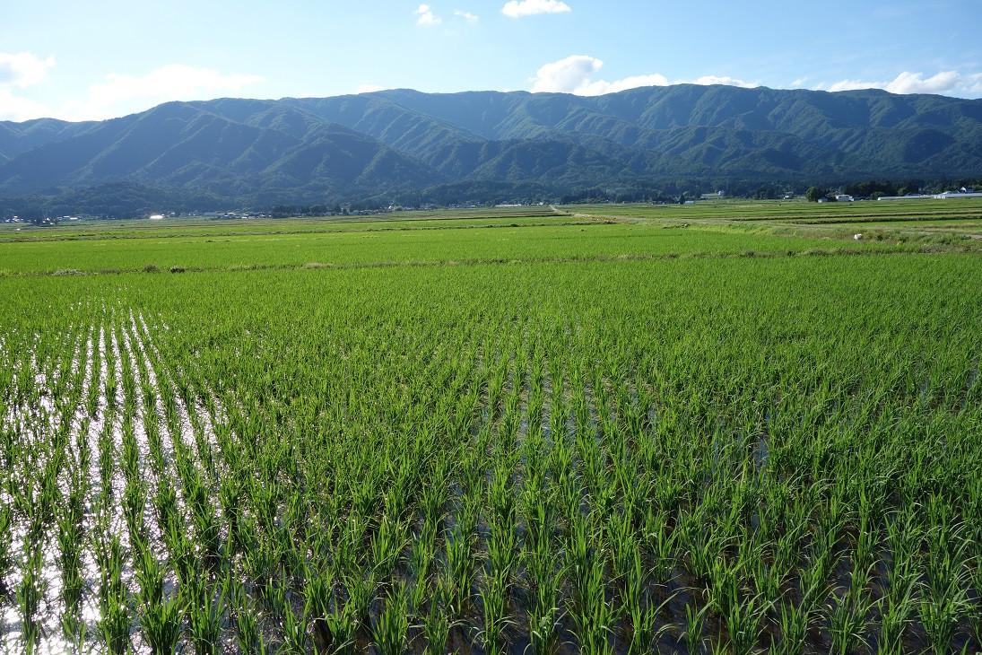 朝日山系、飯豊山系の豊富な水資源がもたらす豊かな恵み