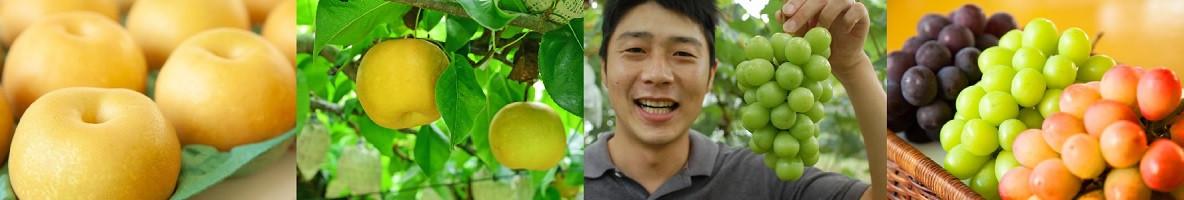 果汁たっぷりフルーツを種類豊富にご用意しています(画像をクリック)