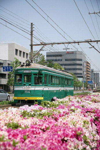 阪堺電車(チンチン電車)