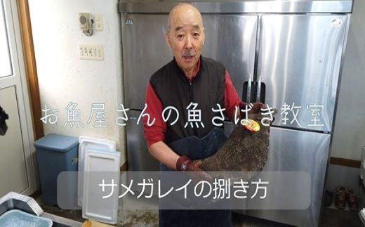 町の鮮魚店「池田鮮魚店」の店主によるサメカレイの捌き方動画です