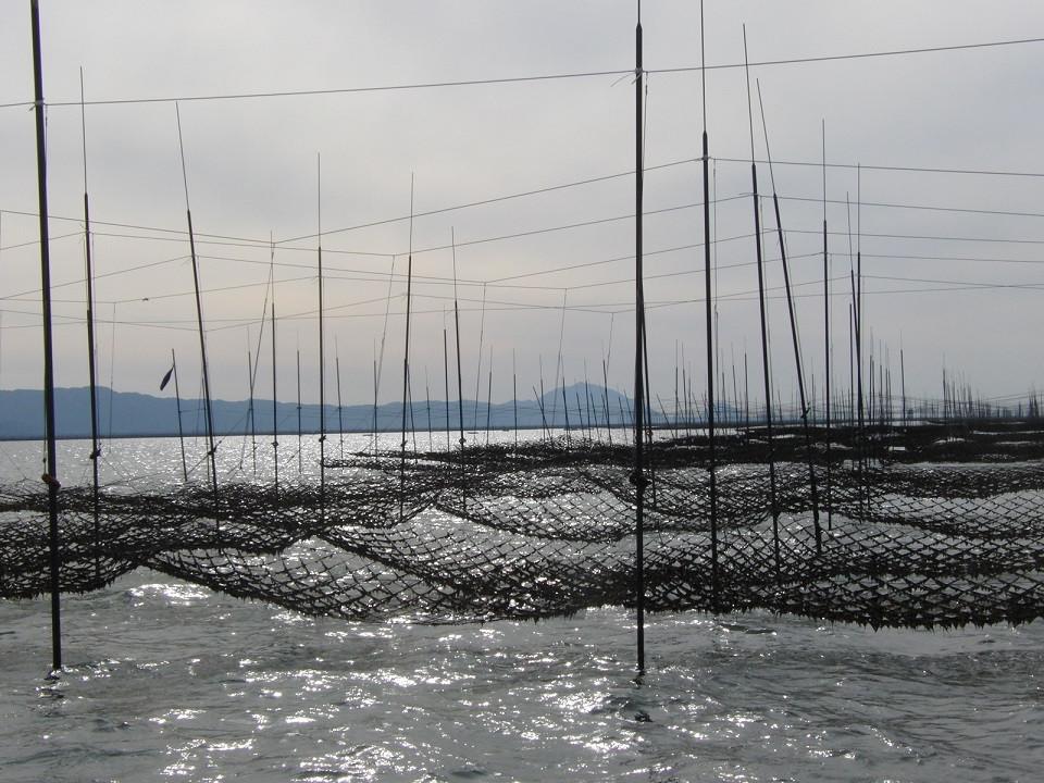 佐賀海苔養殖風景