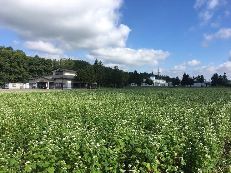 サホロ農園のそば畑