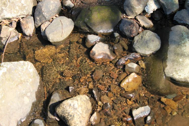近くを流れる小川の水です。ほんっとに綺麗です。
