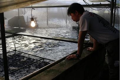 宮崎県 中村養鰻場の様子