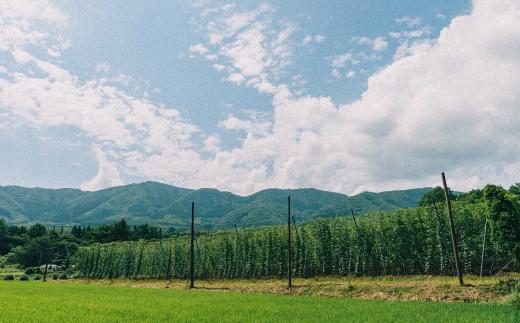 ホップ畑のある風景
