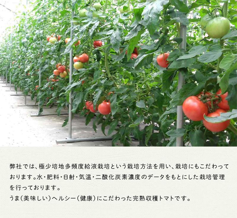 完熟で収穫した美味しいトマトです♪
