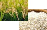 米は佐賀県産「ひよく米」を使用。