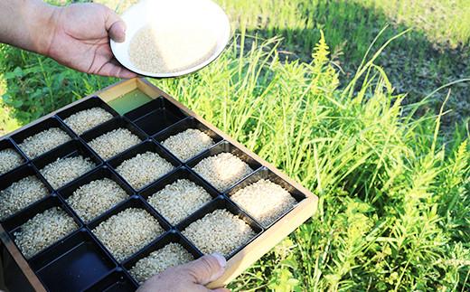 お米の農産物検査