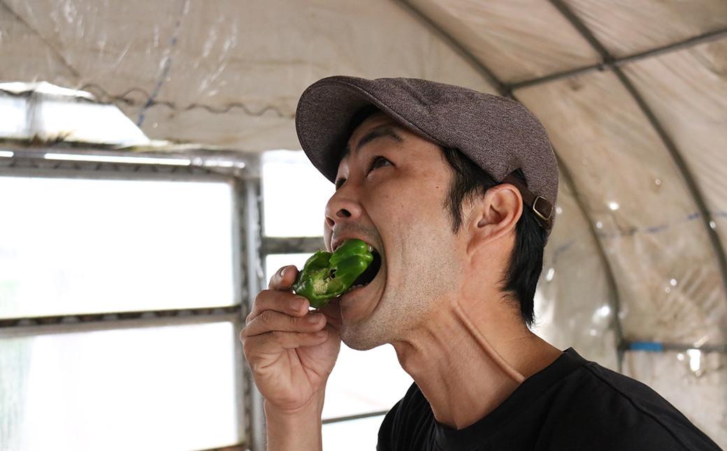 """生でも食べられる""""究極のピーマン""""(写真:生産者・坂口さん)"""