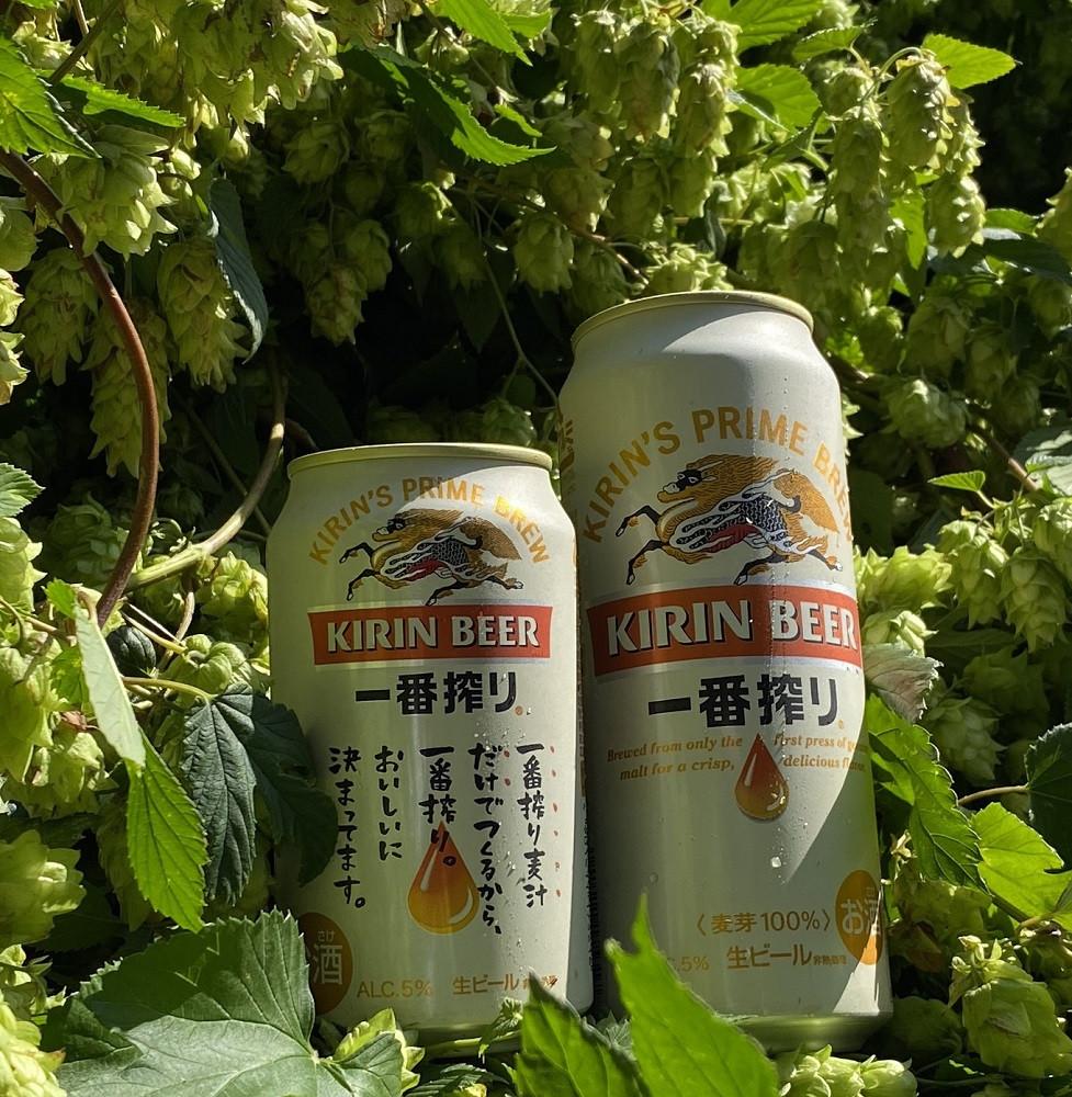 """ホップは""""ビールの魂""""とも言われる"""
