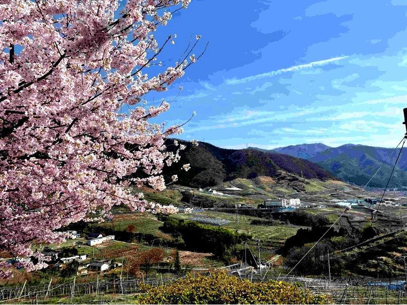 甲州市勝沼の扇状地は、果樹の一大生産地です。