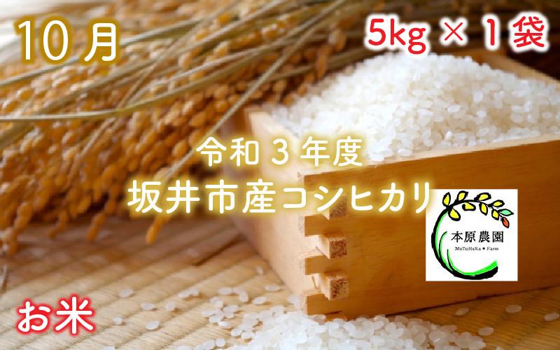 10月 【令和3年度】坂井市産コシヒカリ 5kg×1袋