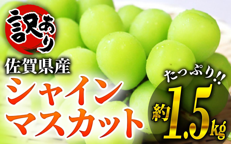 【訳あり】佐賀県産シャインマスカット 1.4~1.5kgです!!
