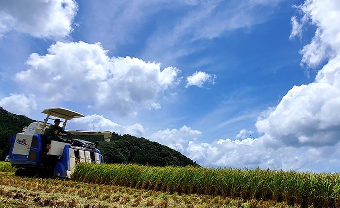 今年も超早場米の刈り取りが始まりました!