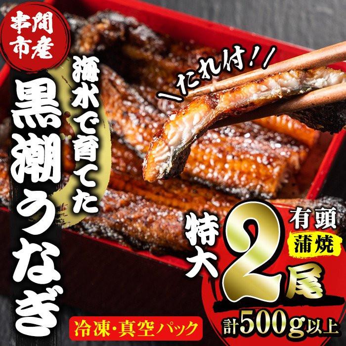 珍しい海水養殖ウナギ(特大サイズ) 寄付金額 25,000 円
