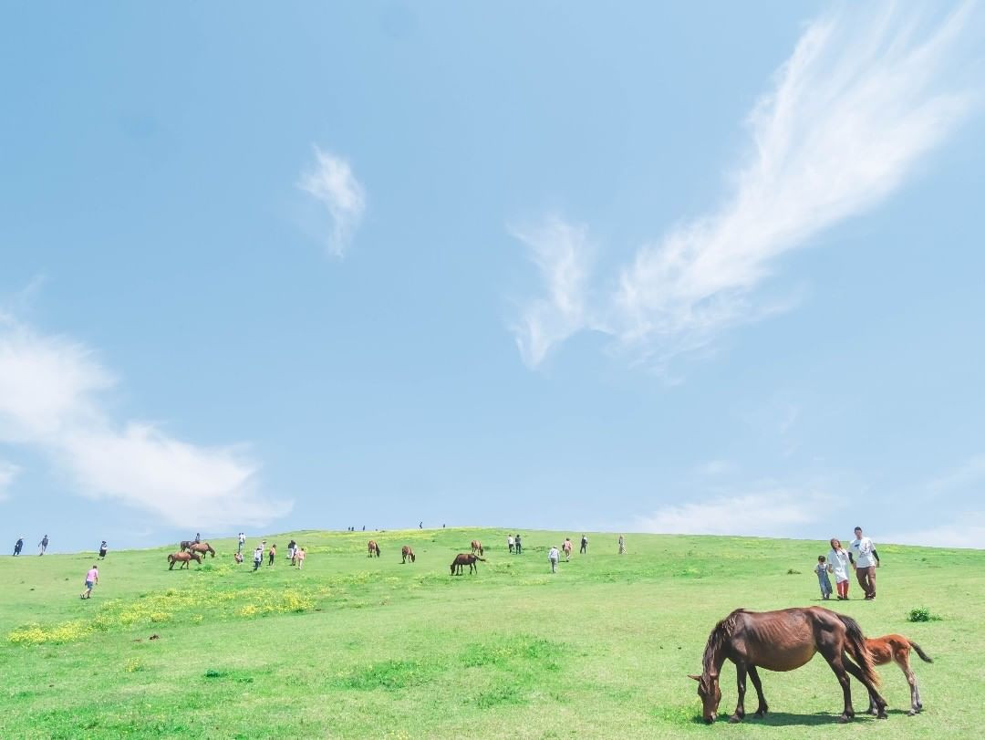 国の天然記念物 都井岬の野生馬「御崎馬(みさきうま)」
