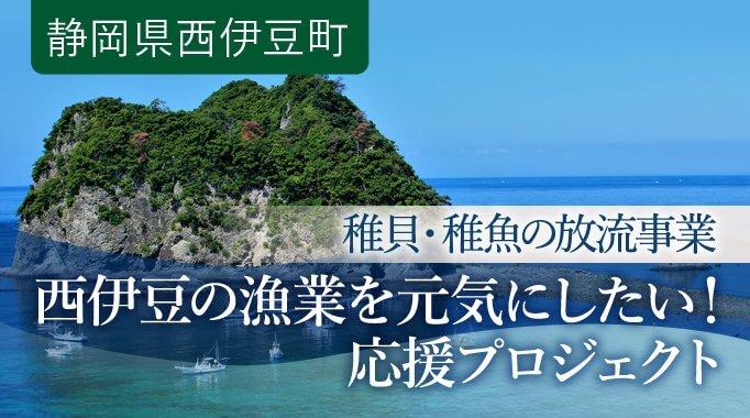 西伊豆の漁業を元気にしたい! 稚貝・稚魚の放流事業(2年目)