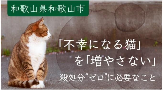 """殺処分""""ゼロ""""を目指して!猫たちの【不妊去勢手術】の実現にご協力ください!"""