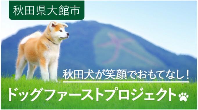 秋田犬が笑顔でおもてなし!観光客に愛されるアイドルを元気にするドッグファーストプロジェクト