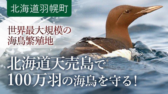 世界最大規模の海鳥繁殖地である北海道天売島で100万羽の海鳥を守る!