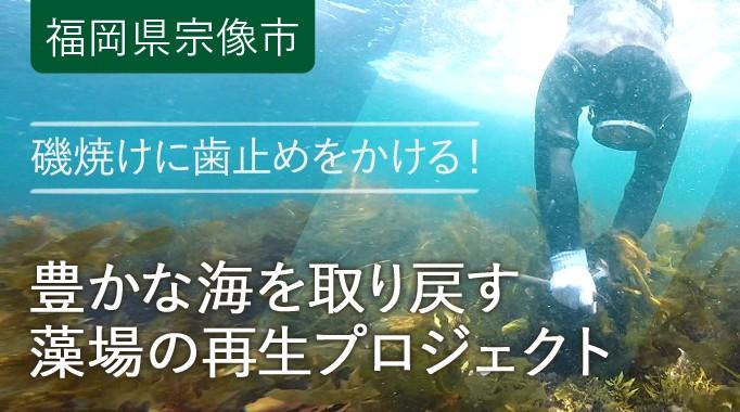 【延長します】磯焼けに歯止め!豊かな海を取り戻す藻場の再生事業(第2弾)