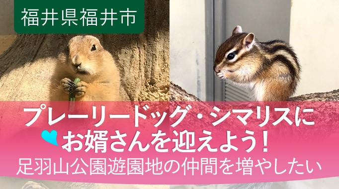 足羽山公園遊園地のプレーリードッグ・シマリスにお婿さんを迎えたい!