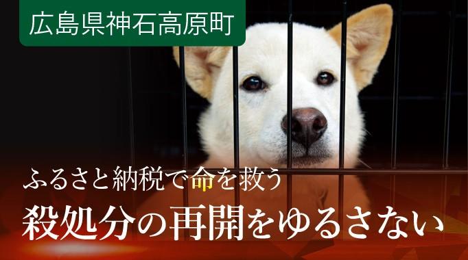 罪のないワンコが殺されています。 ふるさと納税(寄附)で犬の殺処分ゼロを!